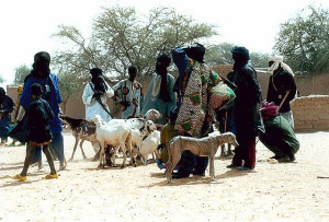Sahel people with livestock and Azawakh dogs image source: https://commons.wikimedia.org/wiki/File:Azawakh_52_jd.jpg