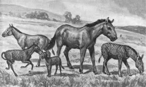 Extinct_horses
